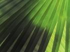 Palm-Sunday-650x487